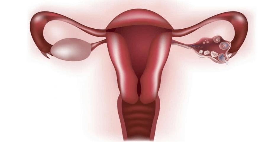 Sintomas de Ovulação: Como Posso Saber Quando Estou Ovulando?